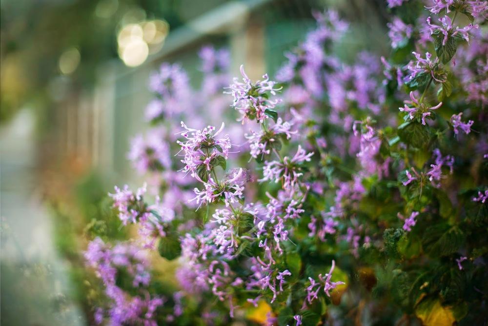 In+the+Garden5.jpg