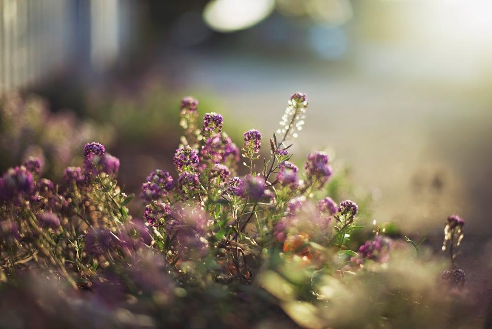 In+the+Garden1.jpg
