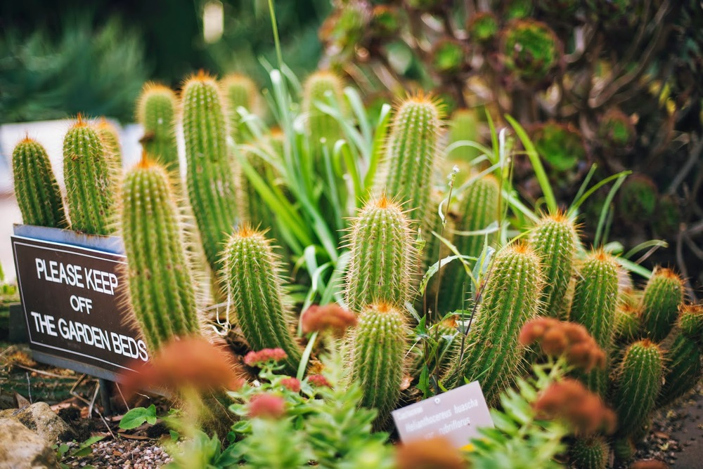 vivian.cactus.jpg