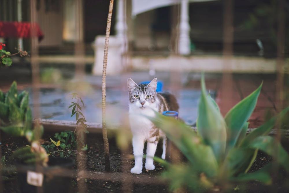 In+the+garden4.jpg