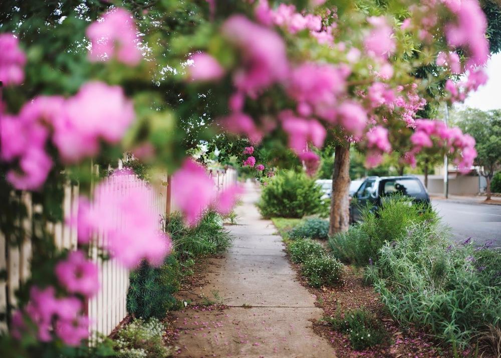 In+the+Garden.jpg
