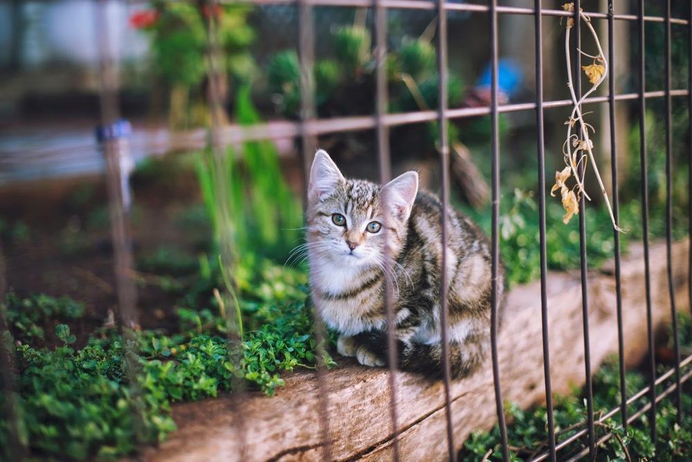 In+the+garden3.jpg