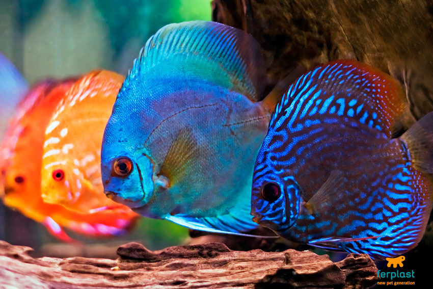 workshops fish.jpg