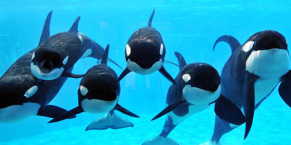 fish orcas.jpg