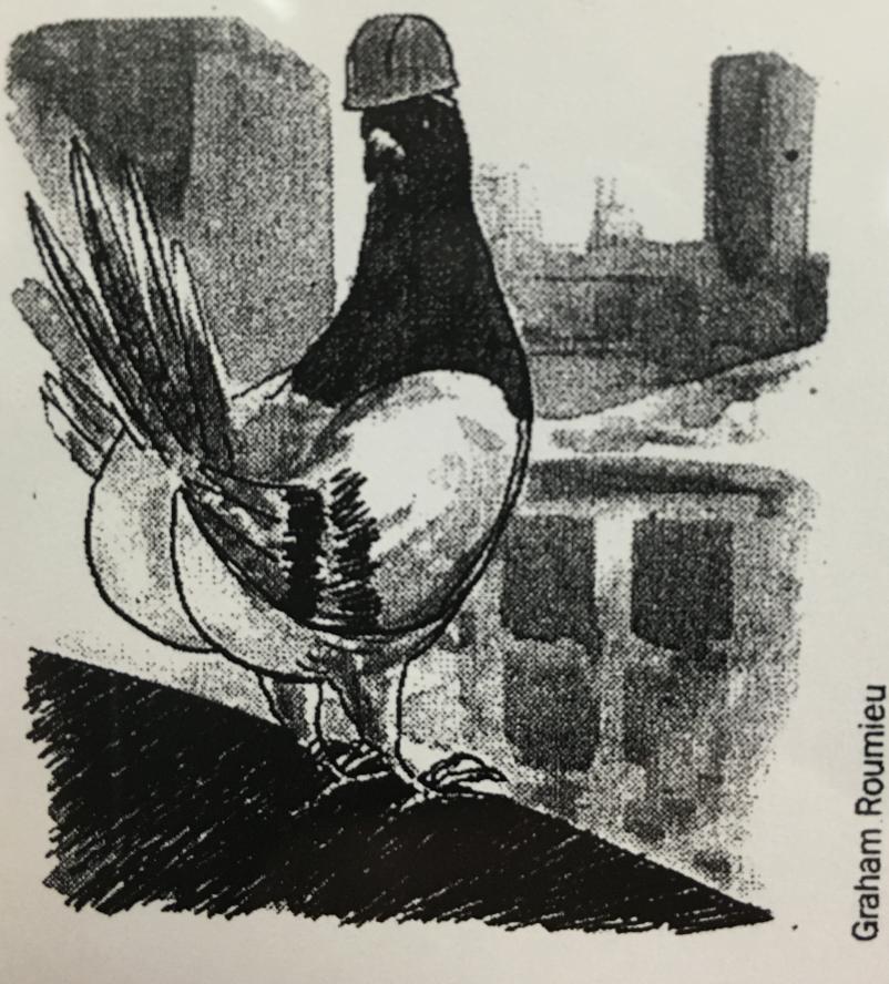 pigeon repellent.jpg