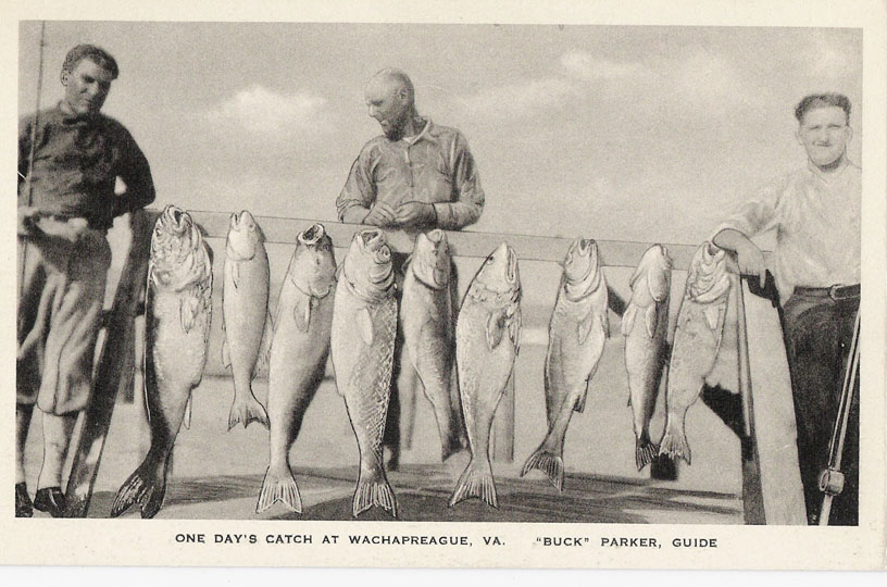 phc_pc_kcm_wachcatch2_1930.jpg