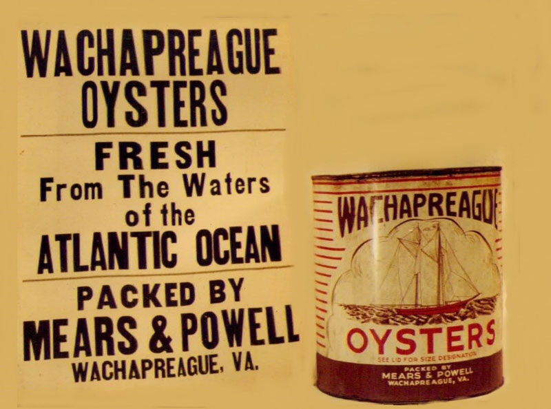 Wachapreague Oyster