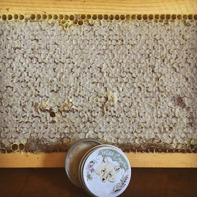 Cocoa Rose Lip Balm now available in the shop 🌹👄 This frame of capped honey came from our bees in Sonoma County 🍯 After extracting the honey the beeswax can be used for body products, candles, and other handmade items. We only harvest when the bees have enough honey to feed themselves and maintain their thriving hives 🐝💛 #herbalalchemy #beekeeping #homesteading