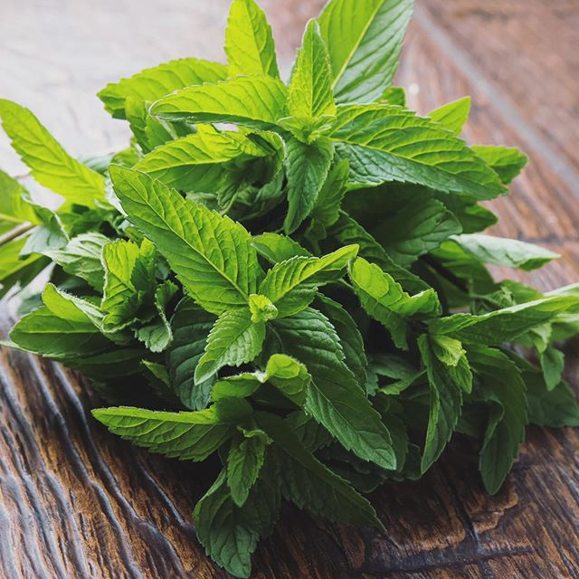 🌿Spearmint! 🌿 oh enlivening leaves! Crisp aroma of minty perfection! 🌿 helps with digestion, headaches, antibacterial and anti inflammatory 🌿 You may find spearmint featured in some of my handmade products, including the tea bath (yes, tea for the bath!) 🛀 💚💧 #plantmagic #herbalalchemy #spearmint