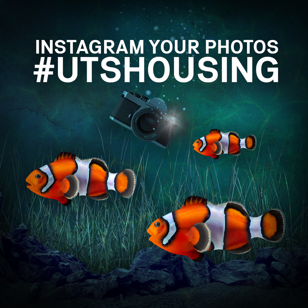 insta square clownfish.png