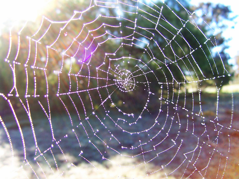 Dewy spider web, image representative of Indra's Net