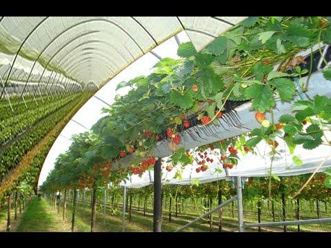 Hi tech plant based.jpg