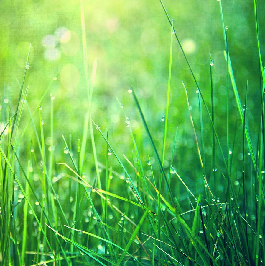 spring-green-grass-dirk-wstenhagen-imagery.jpg