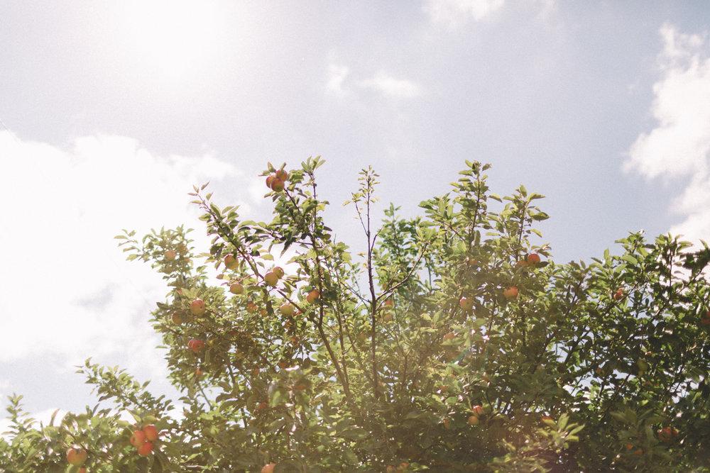 JG4photos.com-LD-HL-18.jpg