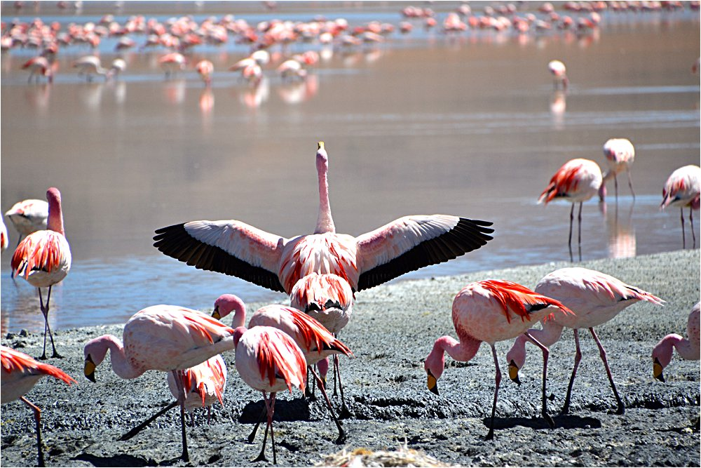 Thousands of flamingos eat their breaky, lunch, and dinner here (which consists almost entirely of plankton, as it turns out.)