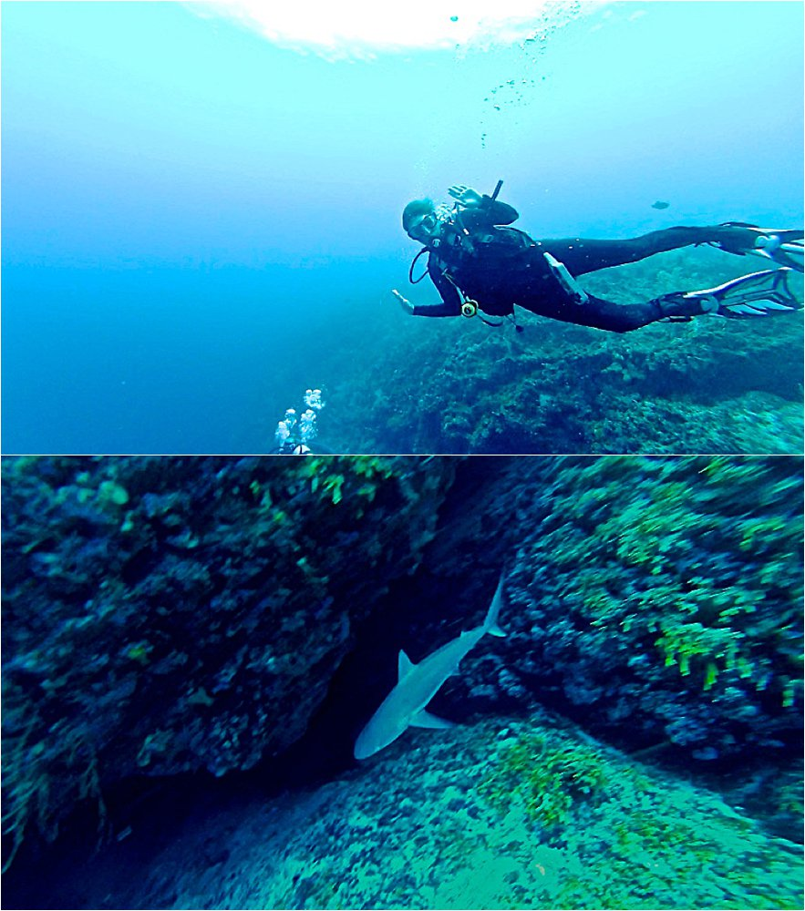 Reef shark in San Andres
