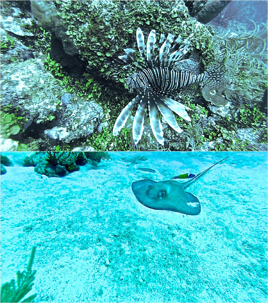 Sting ray and lionfish in San Andres