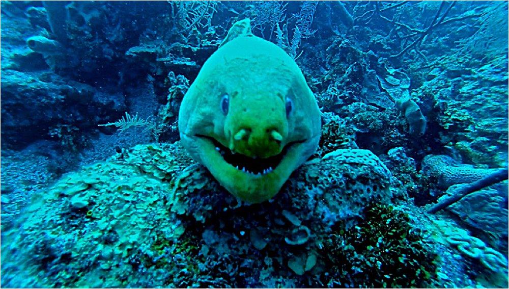 Moray eel! She was a big girl.