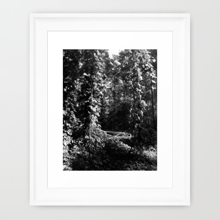 vines-6g0-framed-prints.jpg