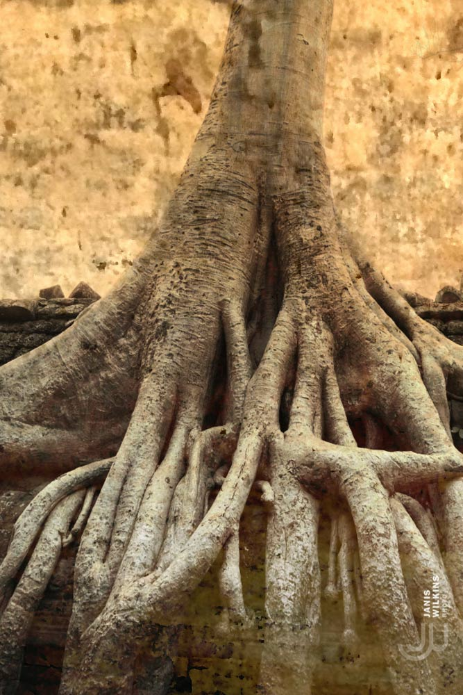 Angkor templeas, Cambodia