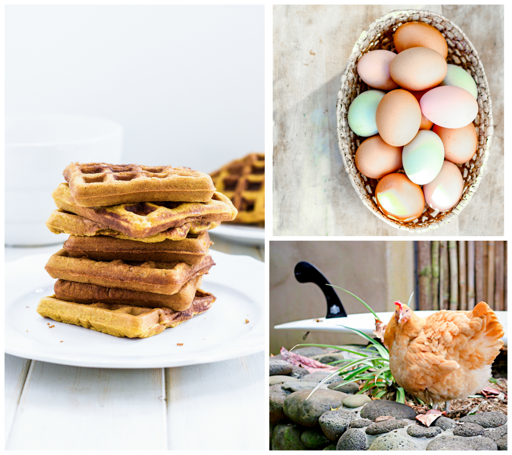 stacks of golden yellow waffles, and beautifully hued eggs from our backyard chickens.