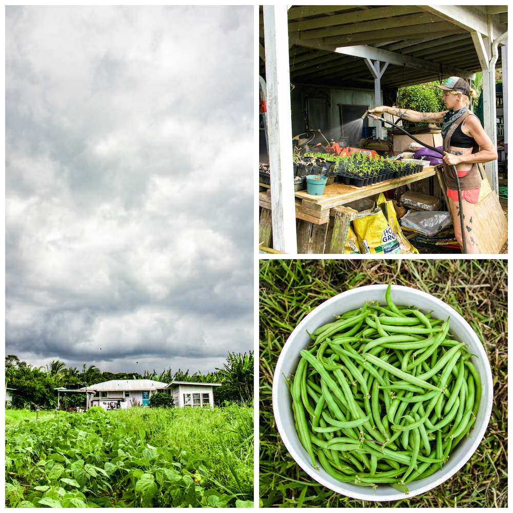 a row of green beans at patrick's farm, danae watering some starts, and a big bucket o' greenbeans.