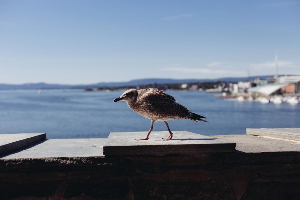 Le-Sycomore_Travel_Oslo_Akershus_6.jpg