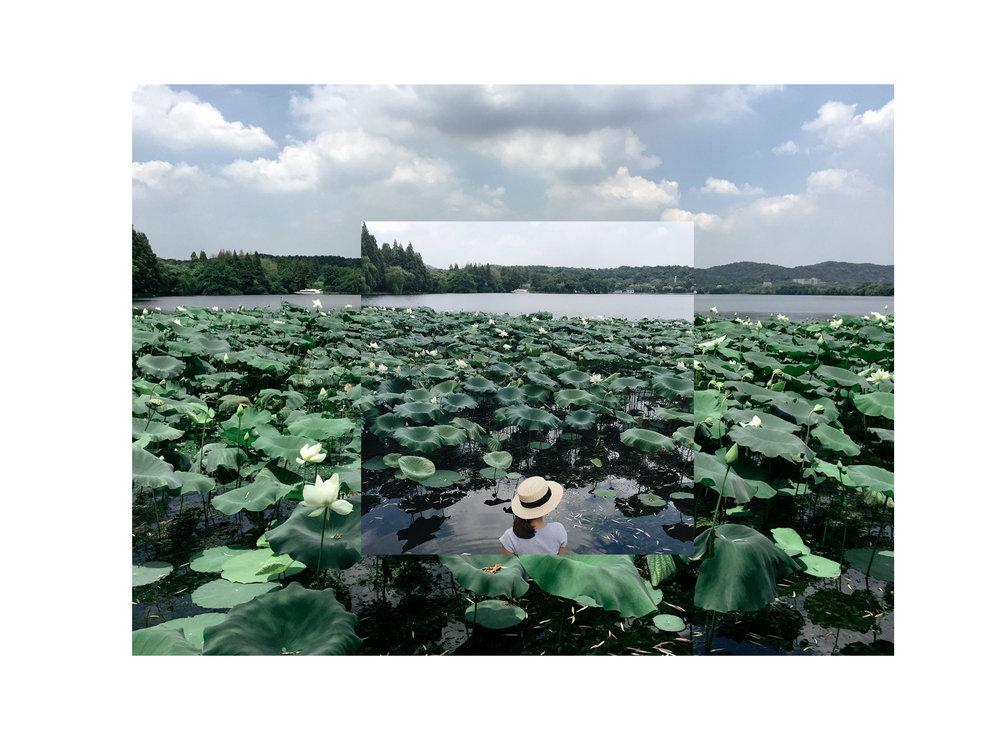 hangzhou-lotus-lesycomore