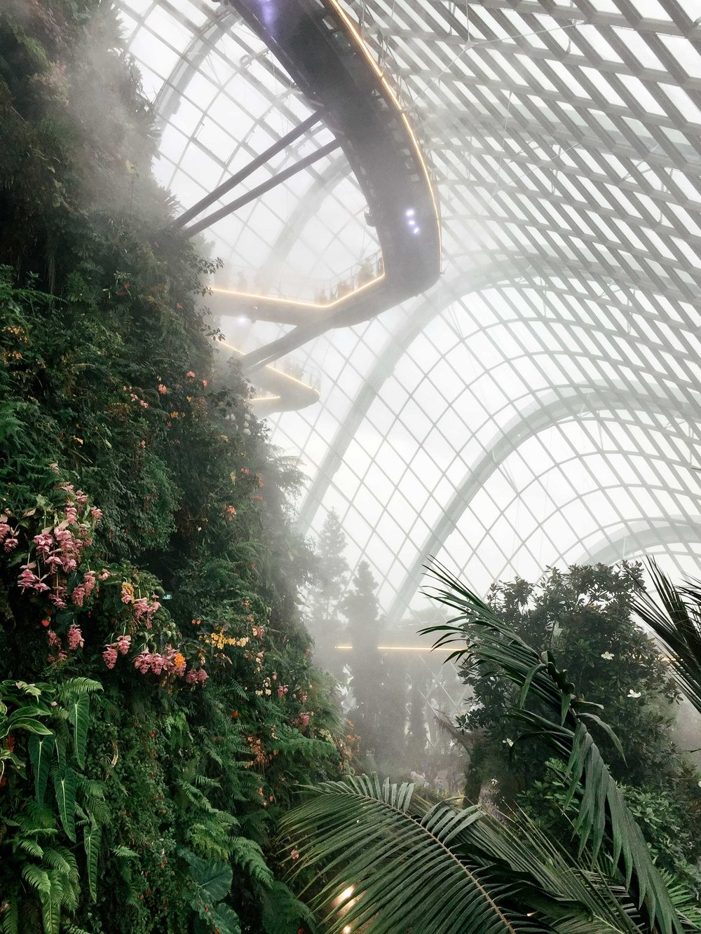 The misty, mysterious jungle