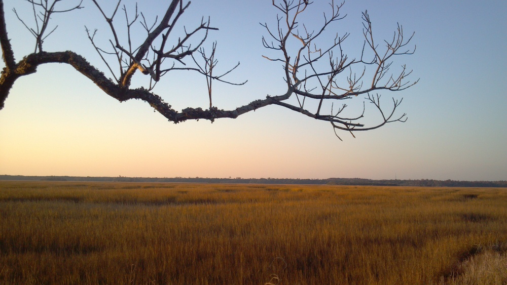 Coastal wetlands, Pender County, North Carolina