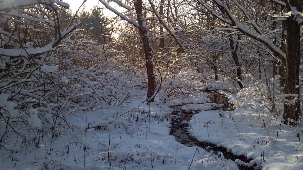 Perennial stream in Hamilton County, Ohio