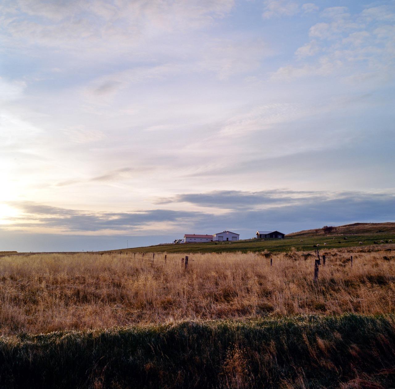 Sunset driving into Borgarnes.   Kodak Portra 400//Hasselblad 500CM