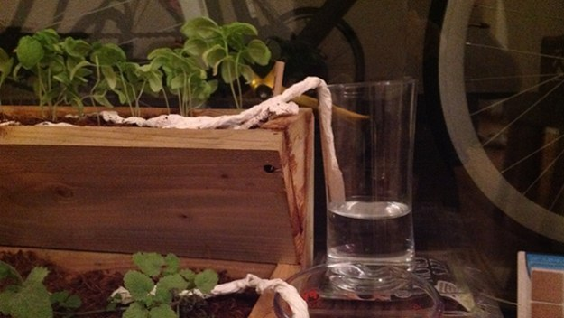 THIS GREAT HACK UTILIZES OSMOSIS - WATER MOVES UP THE PAPER TOWEL AND IS DEPOSITING INTO THE SOIL