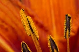 Anthers of a flower