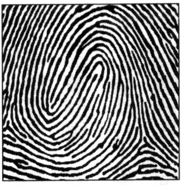 fingerprint Composite-Whorl.jpg