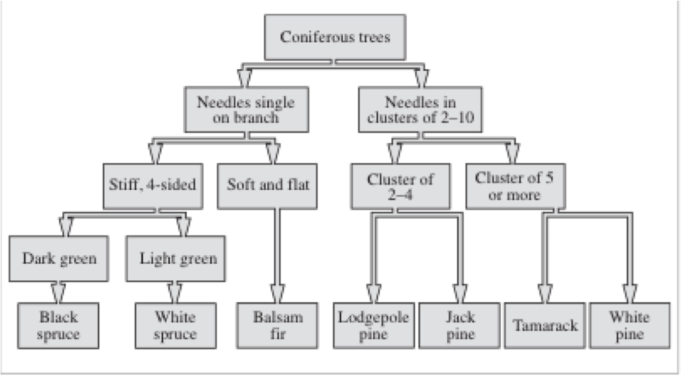 Unit a trees forests 2 kurpinskis class now a tree dichotomous key ccuart Image collections