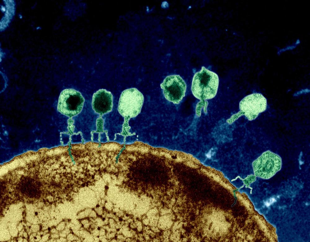 bacteriaphage.jpg