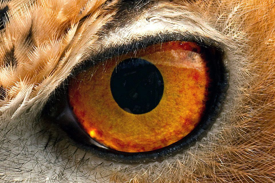 eye-58a6d30b5f9b58a3c9093a69.jpg