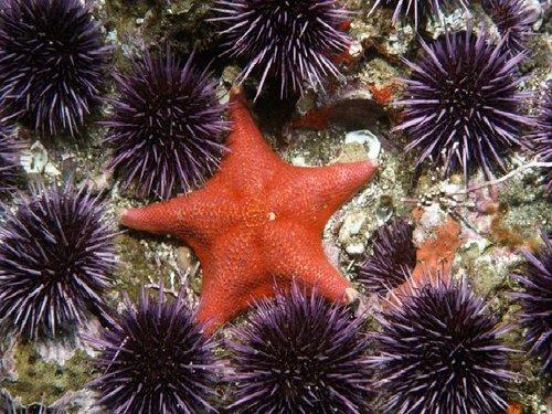 starfish-and-urchin.jpg