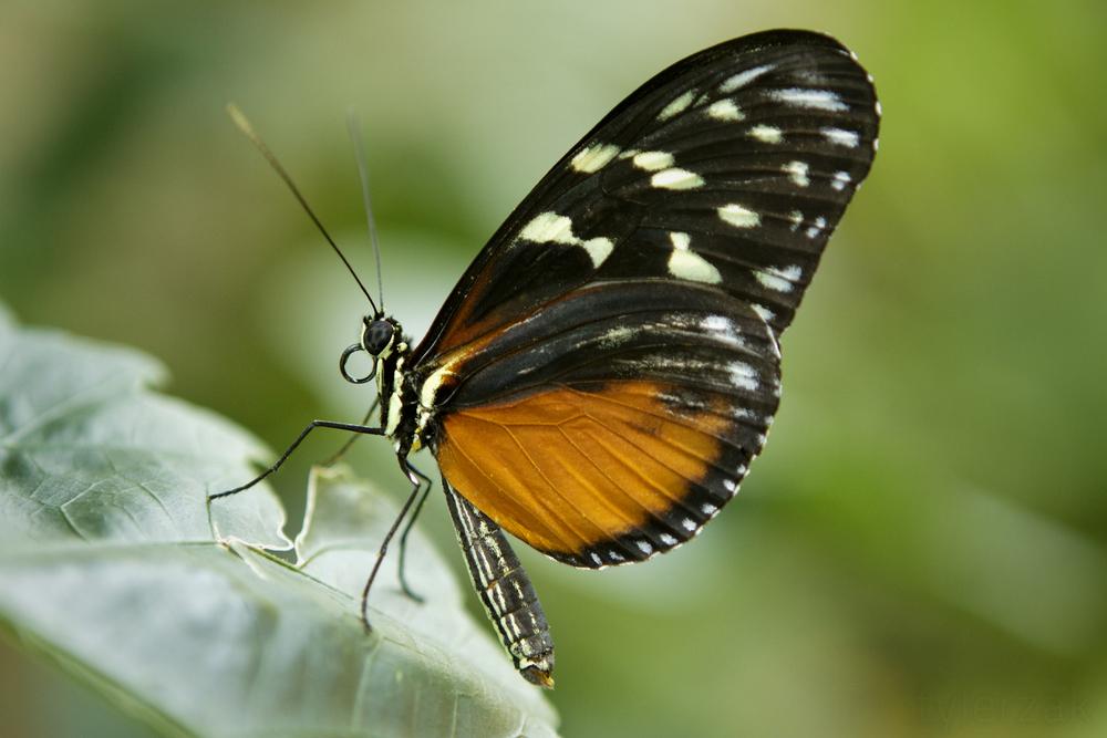 monarchMacro.jpg