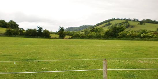 55 acres of grassland