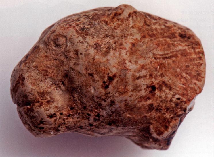 Figure 5. Carved miniature feline head, Kostenki 1 ( http://www.donsmaps.com/images29/lionimg413.jpg ).