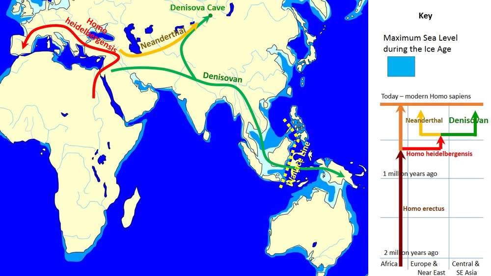 Figure 3. The Evolution and geographic spread of Denisovans as compared with other groups. (https://en.wikipedia.org/wiki/Denisovan)