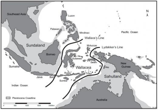 Figure 3. Map of Southeast Asia showing the ancient shoreline around the time that hominins journeyed to the island of Flores ( http://humanorigins.si.edu/research/asian-research-projects/hobbits-flores-indonesia ).