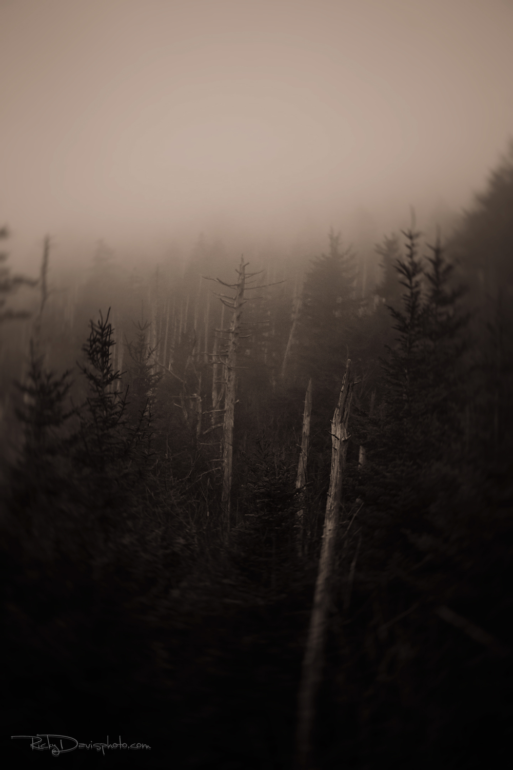 """Devoured"" Clingman's Dome - 2014 - Photo by Ricky Davis of TRD Photography"