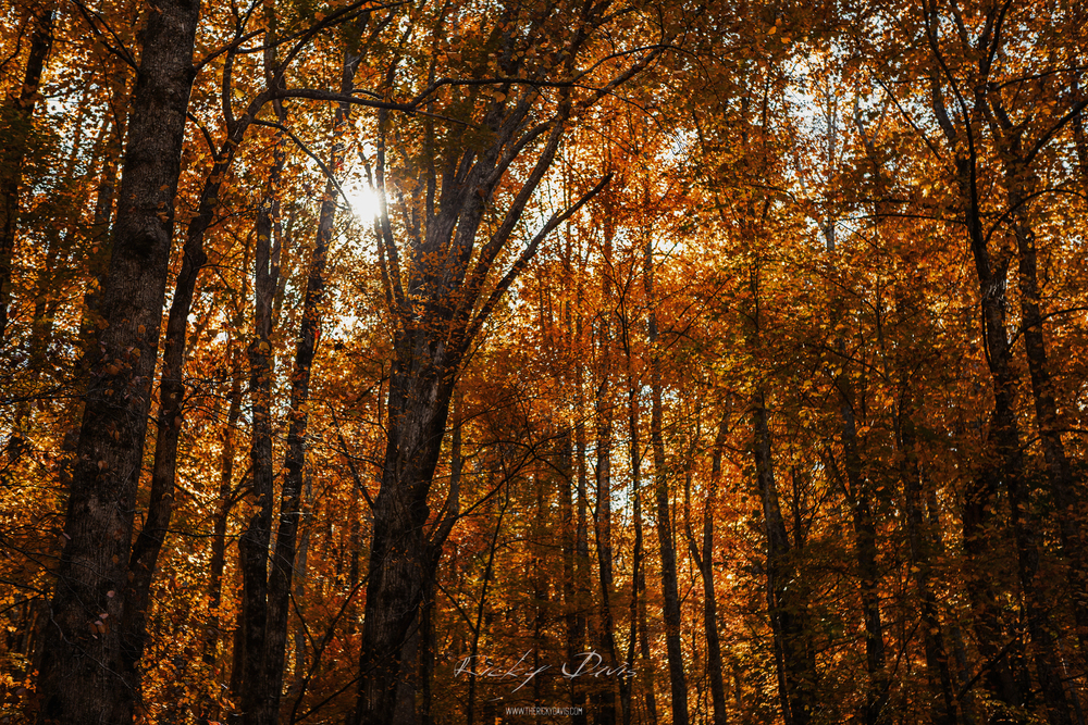 Fall Colors in the Great Smoky Mountains National Park. Photographer Ricky Davis of TRD Photography