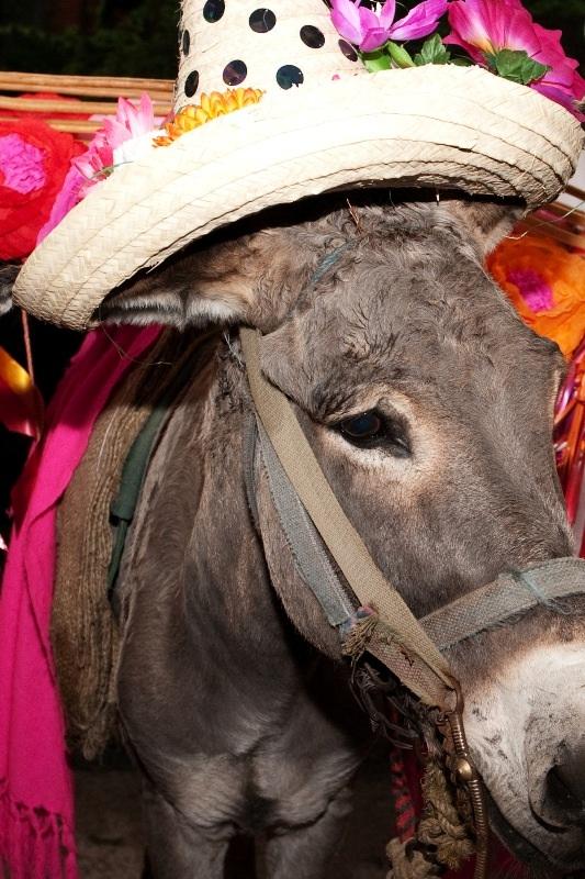 chozich donkey.jpg