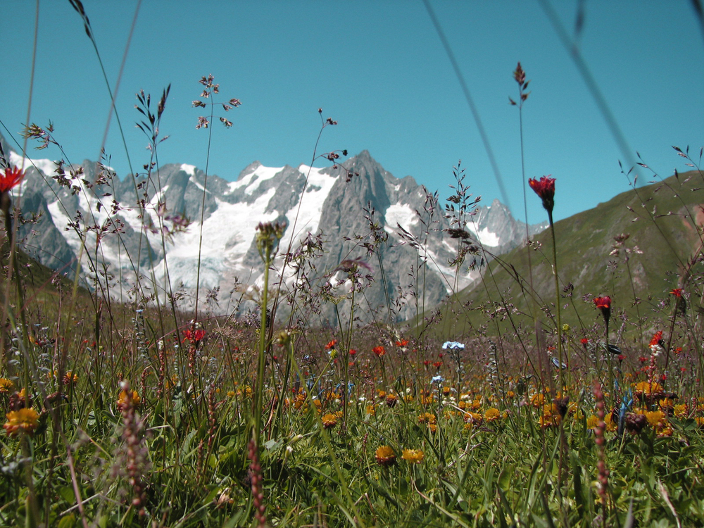 Alpine Meadow by SNappa2006