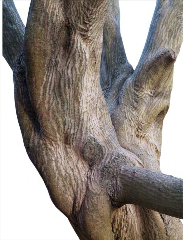 VERDANT NY - tree trunk 1.png