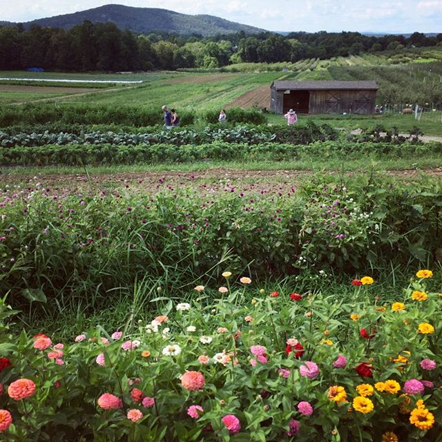 So yesterday wasn't too bad 🌺🌸🌼🍎🍏🍅🐰🐑🥜#fishkillfarms #hudsonvalley #pickyourown